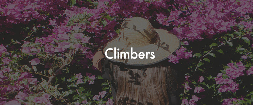 Buy Plants Online | Climbers | Free Shipping Australia Wide