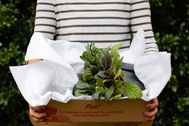 Gift Plants Online - Plants in a Box