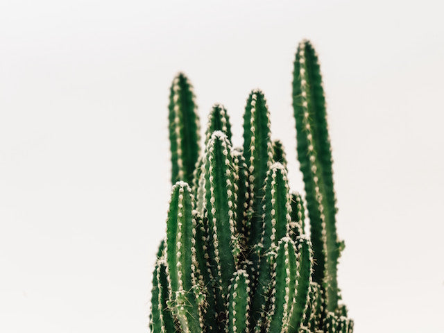 Cacti and succulents online | Plants in a Box