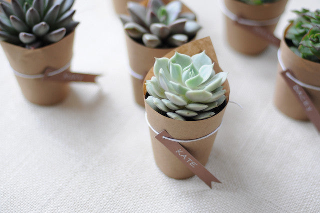 Succulents | Wedding Favours | Plants Online | Free Shipping  | Plants in a Box