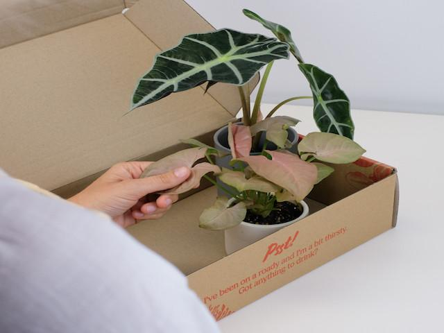 Shop Growing Gift Packs Online- Free Shipping Australia Wide