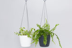 DIY Self-Watering Recycled Hanging Planter With Plant + Soil