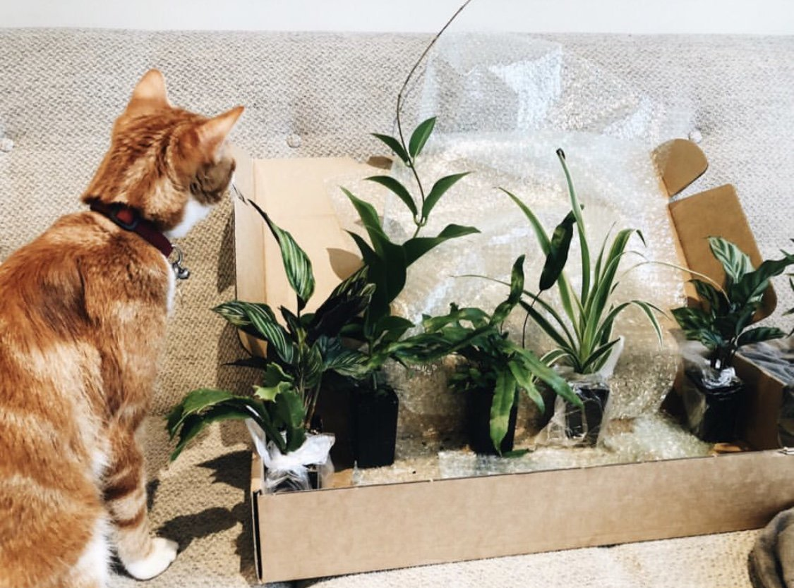 Indoor plants that are pet friendly - Furry Friend plants