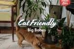 Cat-Friendly Indoor Plant Pack - 85mm