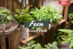 Fern Mixed Pack