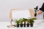 A Giftbox Of Houseplants