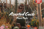 Assorted Cacti Pack
