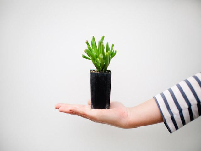 Buy Succulents Online Australia Free Shipping