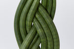 Sansevieria cylindrica | green thick fleshy leafs intertwined