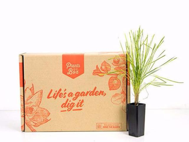 Buy Plants In Bulk | Plants in a Box | Great Prices