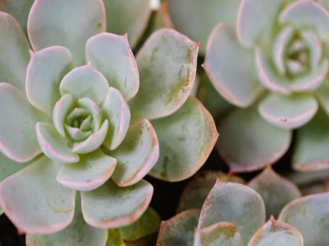 Succulents Online - Gift Packs Plants in a Box