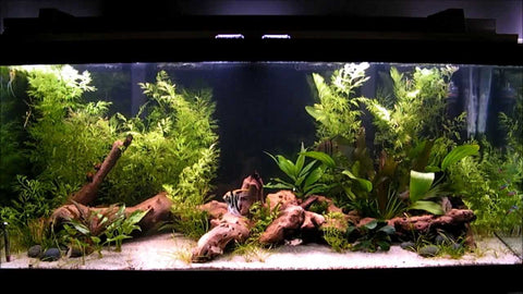 Brand New Fisheshop indian make semi planted aquarium ( Rental )