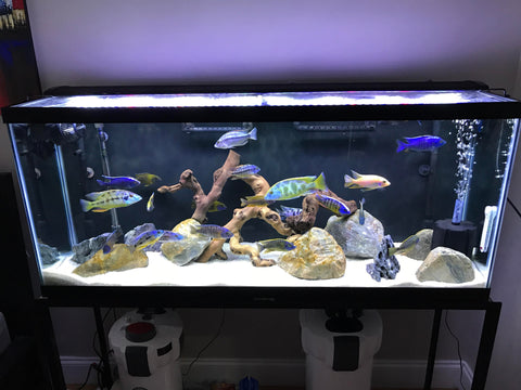 Brand New Fisheshop indian make aquarium ( Reantal ).