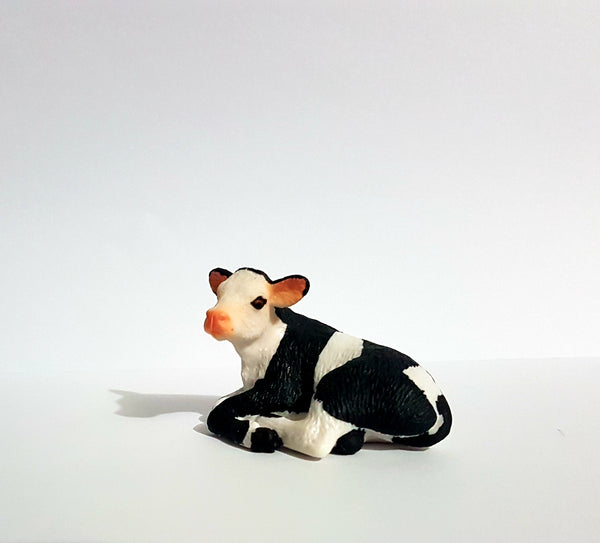 Holstein Calf Laying