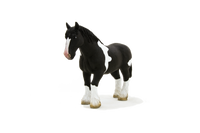 Black & White Clydesdale Horse