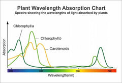 Plant Absorption Reference Chart