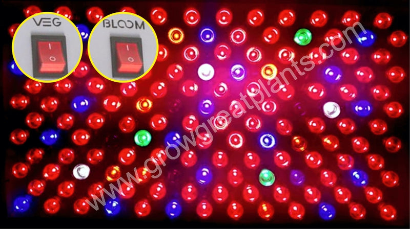 products/Bloom_Light.jpg