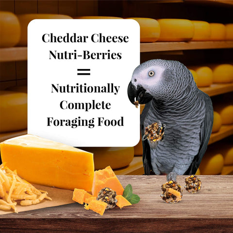 LAFEBER'S Cheddar Cheese Nutri-Berries Pet Bird Food, Made with Non-GMO and Human-Grade Ingredients, for Parrots