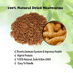 Mealworms -5 Lbs - 100% Non-GMO Dried Mealworms - Large Meal Worms - Bulk Mealworms -High Protein Treats-