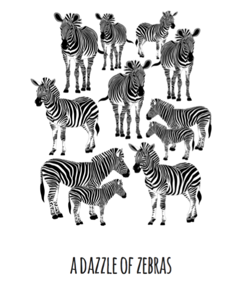 A Dazzle of Zebras Art Print