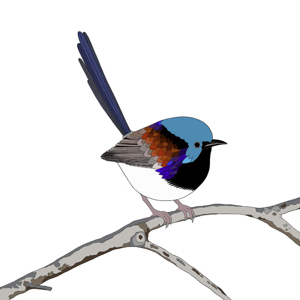 A-Z Australian Animals Variegated Fairy Wren Art Print