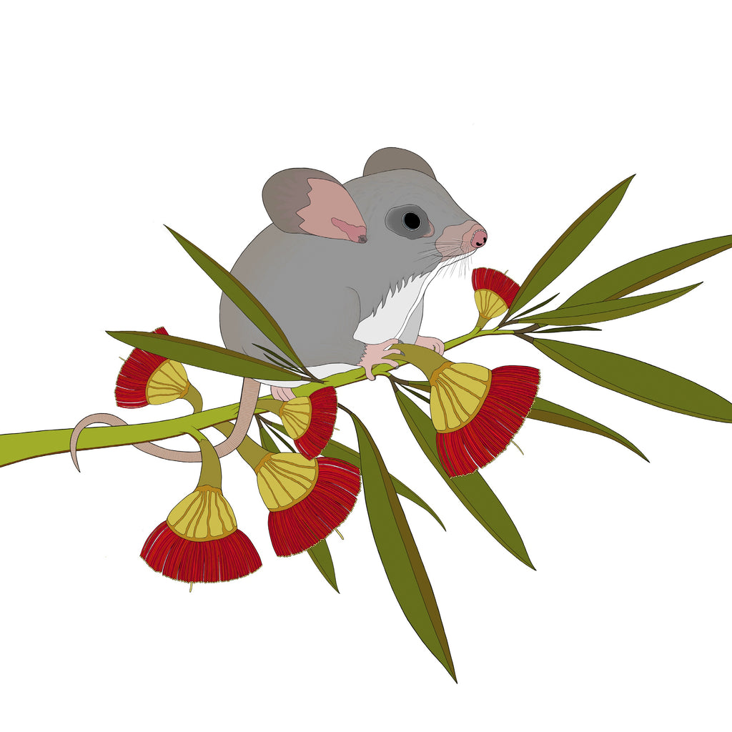 RP - A-Z Australian Animals Little Pygmy Possum Art Print