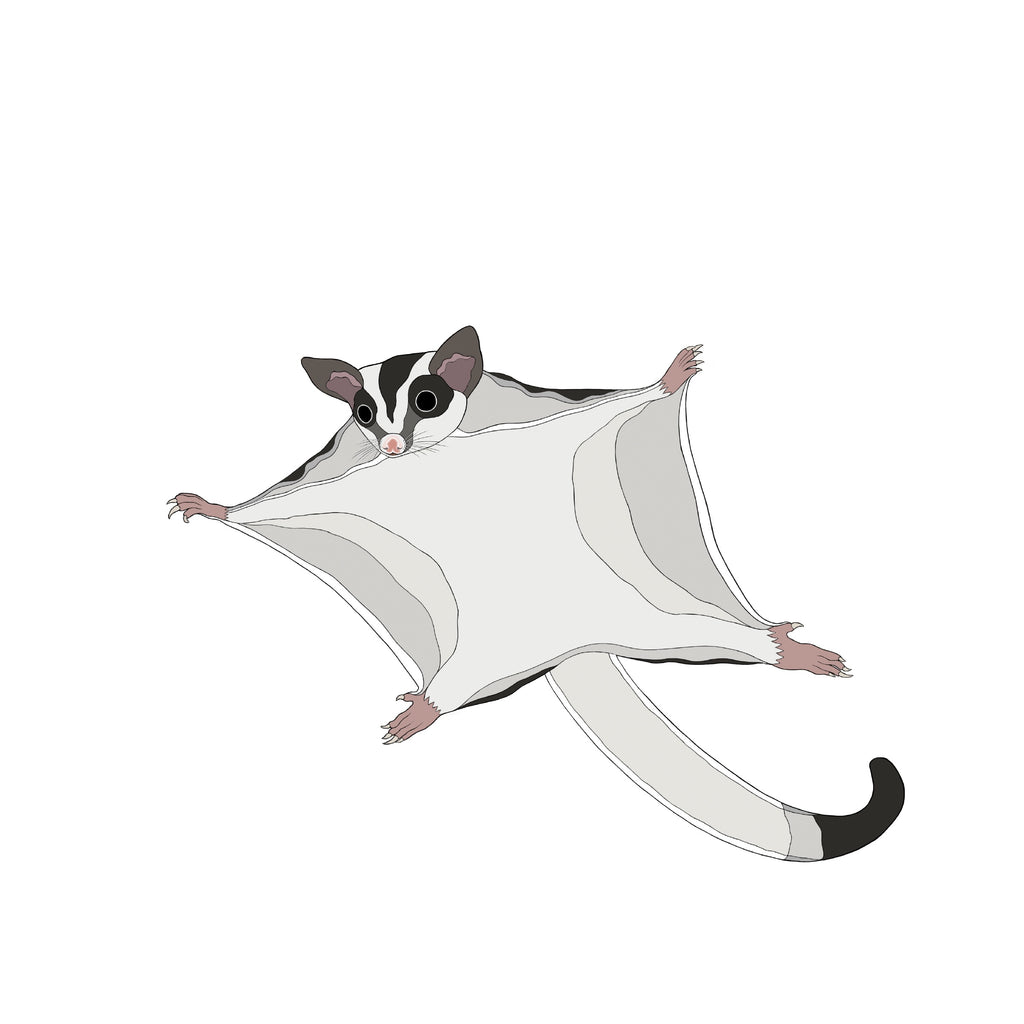 RP - A-Z Australian Animals Sugar Glider Art Print
