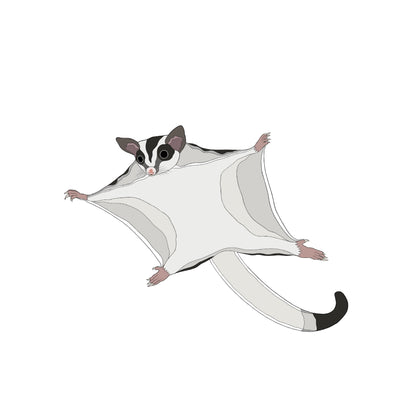 A-Z Australian Animals Sugar Glider Art Print