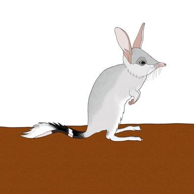 A-Z Australian Animals Bilby Art Print