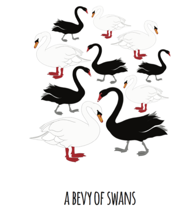 A Bevy of Swans Art Print