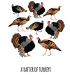 A Rafter of Turkeys Art Print