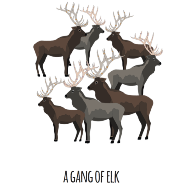 A Gang of Elk Art Print