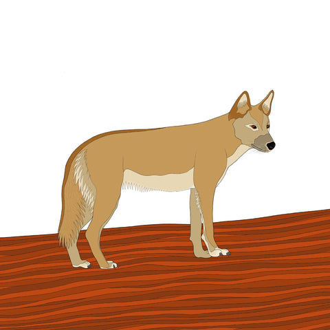 RP - A-Z Australian Animals Dingo Art Print