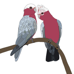 A-Z Australian Animals Galah Art Print