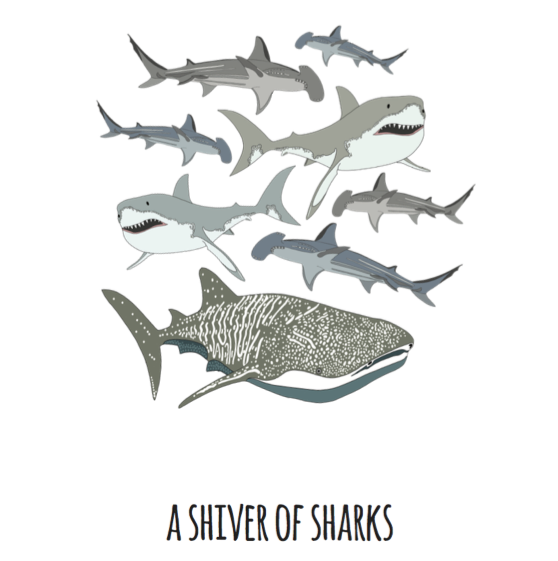 A Shiver of Sharks Art Print