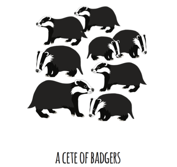 A Cete of Badgers Art Print