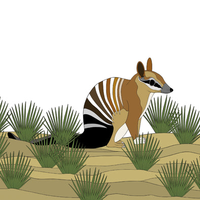 A-Z Australian Animals Numbat Art Print