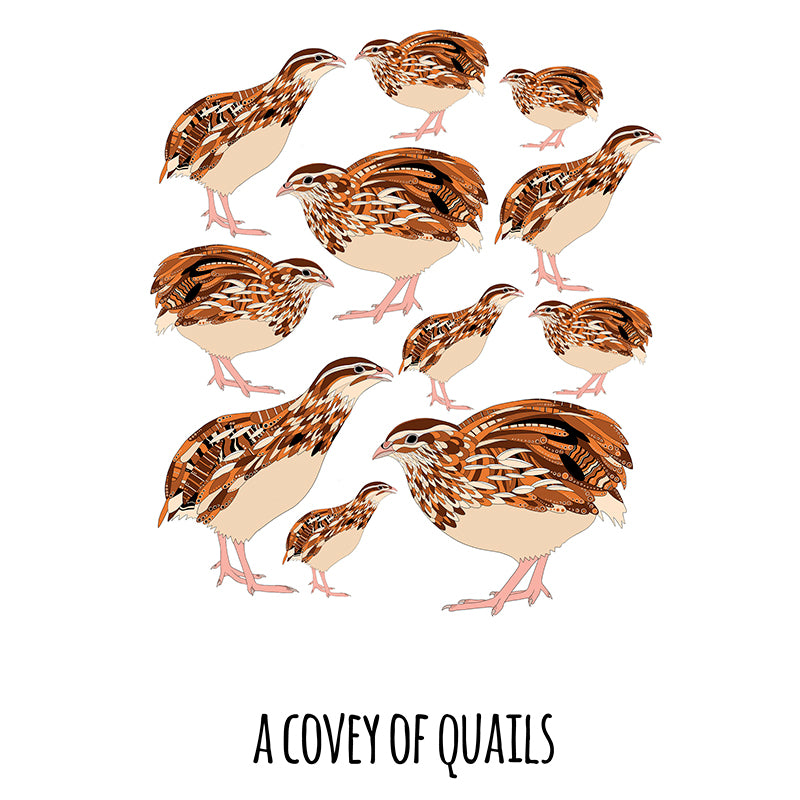 RP - A Covey of Quails Art Print