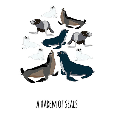 A Harem of Seals Art Print