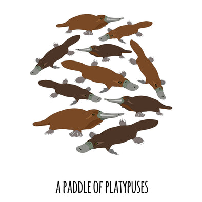 A Paddle of Platypuses Art Print