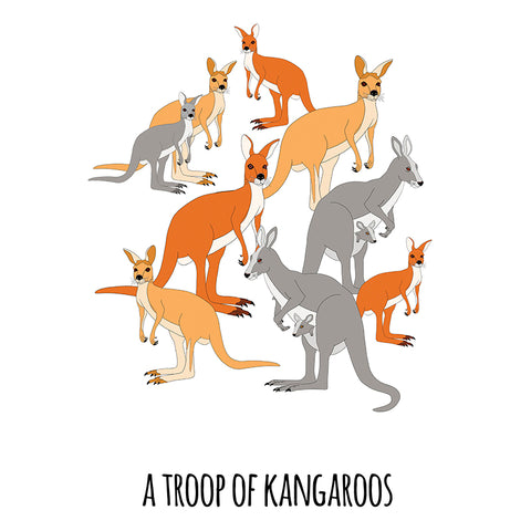 RP - A Troop of Kangaroos Art Print