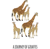 A Journey of Giraffes Art Print