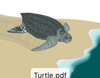 A-Z Leatherback Turtle Art Print