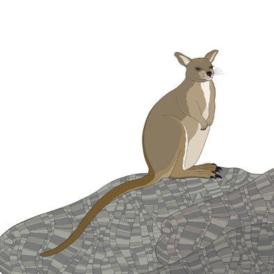 A-Z Australian Animals Unadorned Rock Wallaby Art Print