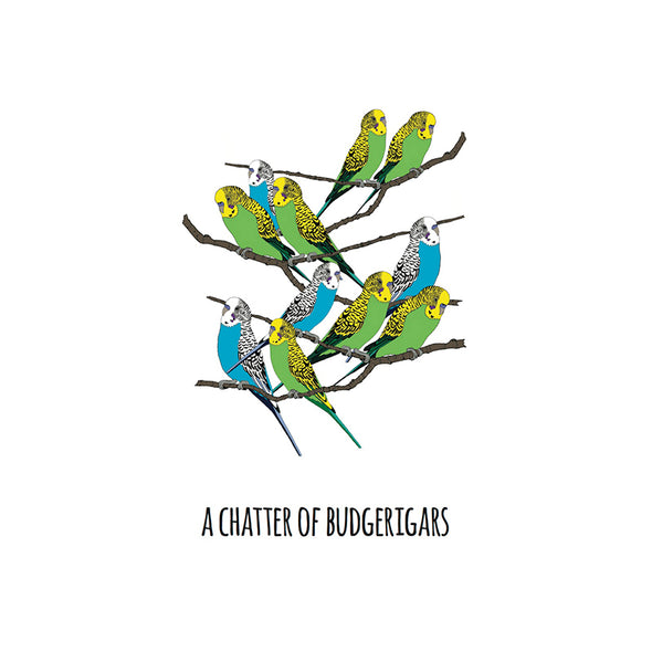 A Chatter of Budgerigars Art Print