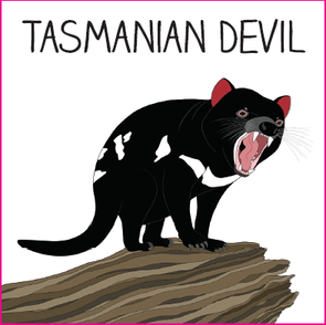 Sticker - Tasmanian Devil