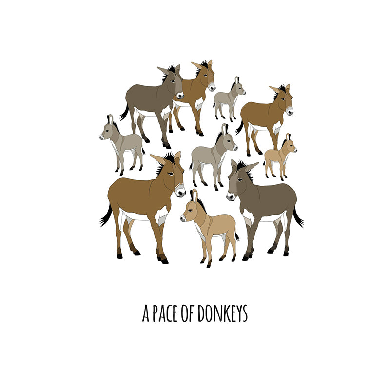 RP - A Pace of Donkeys Art Print