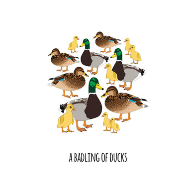 A Badling of Ducks Art Print