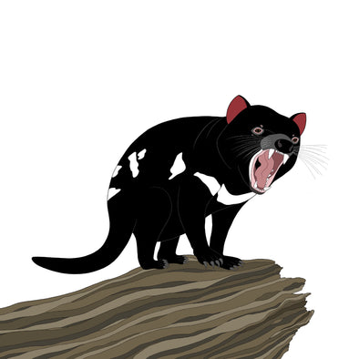 A-Z Australian Animals Tasmanian Devil Art Print
