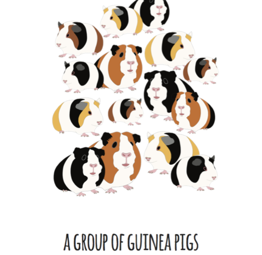 A Group of Guinea Pigs Art Print